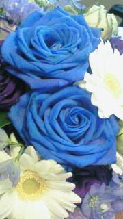 青い薔薇。_c0029779_13351987.jpg