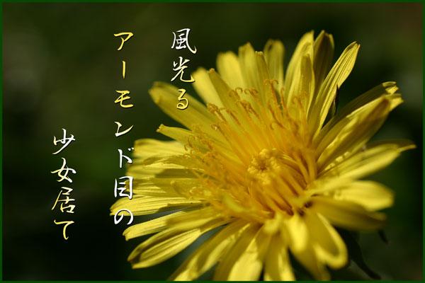 c0065587_1502759.jpg