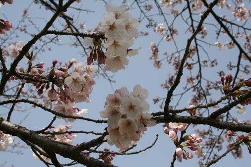 お花見_c0140599_18371460.jpg