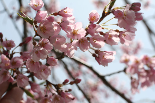 お花見_c0140599_18382465.jpg
