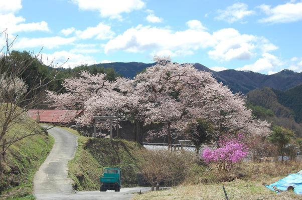 桜を撮りに。_d0136901_2352096.jpg