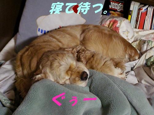 b0067012_0535040.jpg