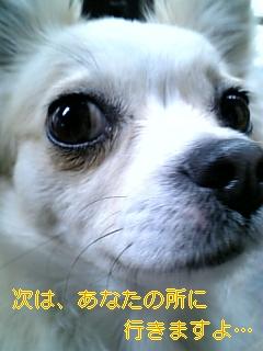 f0148927_16125777.jpg