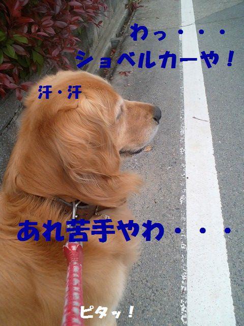 b0127531_204216.jpg