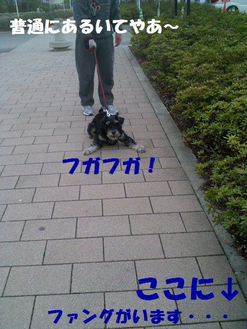 b0127531_2065236.jpg