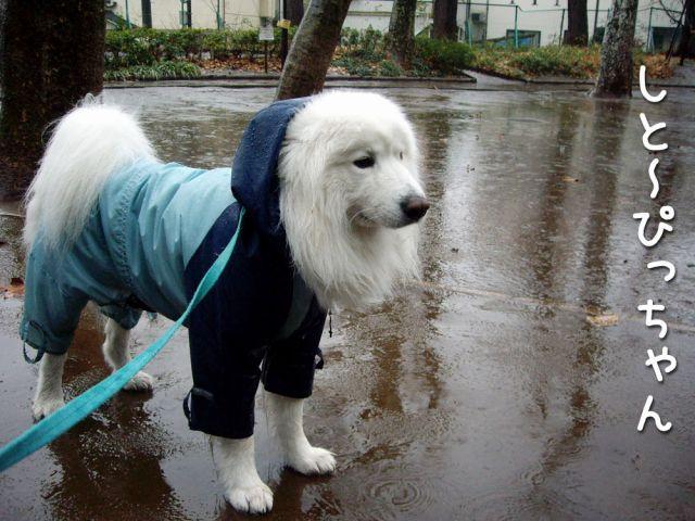 ♪『雨』_c0062832_16532012.jpg