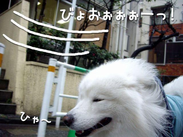 ♪『雨』_c0062832_16541743.jpg