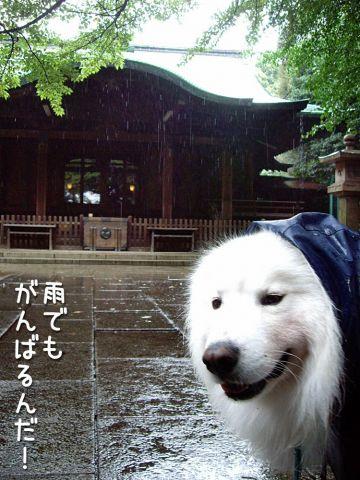 ♪『雨』_c0062832_16551584.jpg