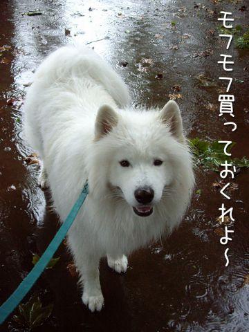 ♪『雨』_c0062832_16555749.jpg