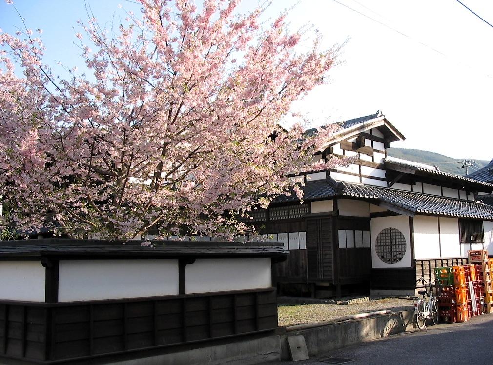 桜マップ 市街地(訂正版)_d0001843_22245115.jpg