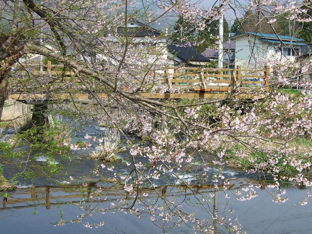 桜マップ 市街地(訂正版)_d0001843_22301458.jpg