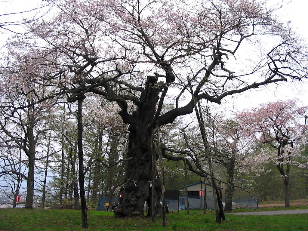 桜マップ 市街地(訂正版)_d0001843_22331455.jpg