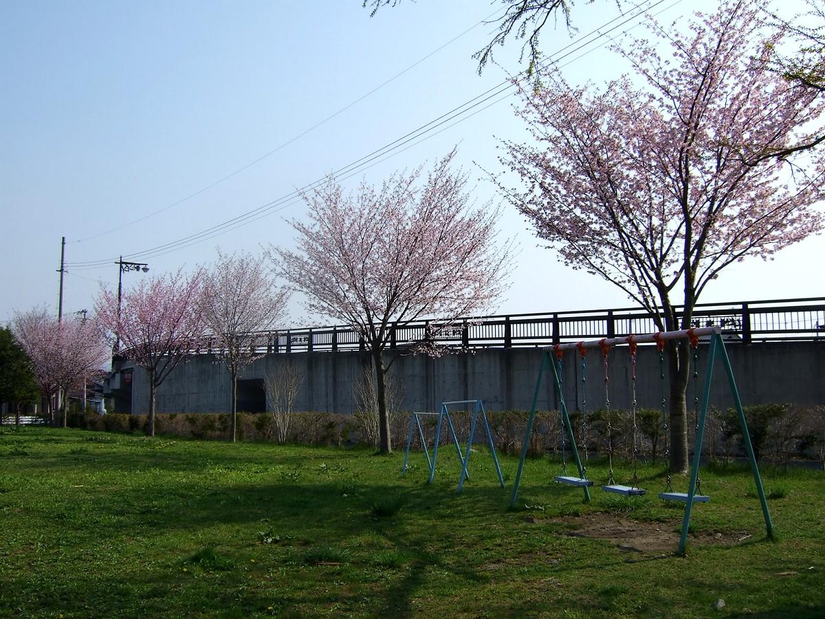 桜マップ 市街地(訂正版)_d0001843_22343956.jpg