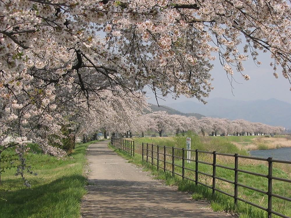 遠野桜マップ(広域)_d0001843_23521992.jpg