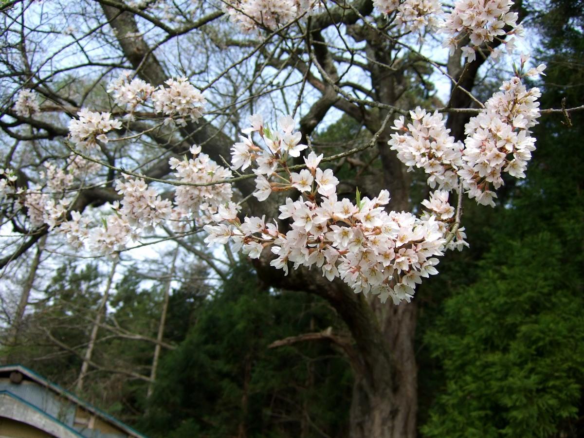 遠野桜マップ(広域)_d0001843_2354826.jpg