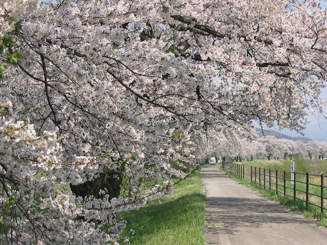 遠野桜マップ(広域)_d0001843_23551330.jpg