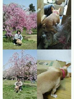 f0090344_20112452.jpg