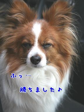 d0013149_15491818.jpg
