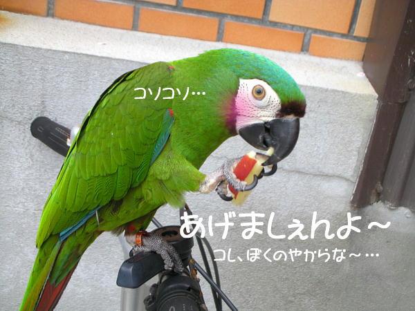 f0132055_1242045.jpg