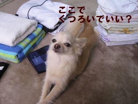b0133861_2037372.jpg