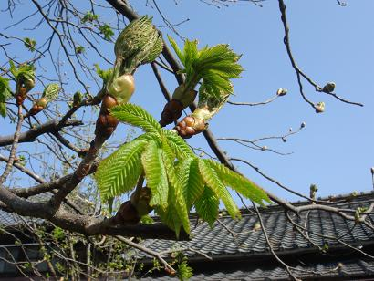 春の息吹を感じて_b0124462_21363342.jpg