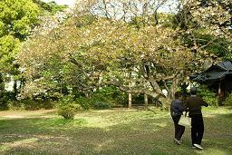 恩賜庭園 人間模様_f0139963_6512843.jpg