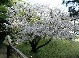 恩賜庭園 人間模様_f0139963_7163752.jpg