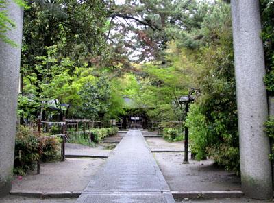 梨の木神社 ヤマブキ_e0048413_22314352.jpg