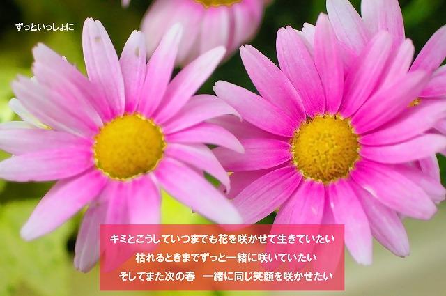 c0112724_1638283.jpg