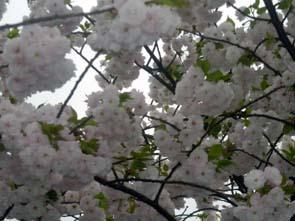 4月20日、陽気に誘われて_d0024438_2124198.jpg
