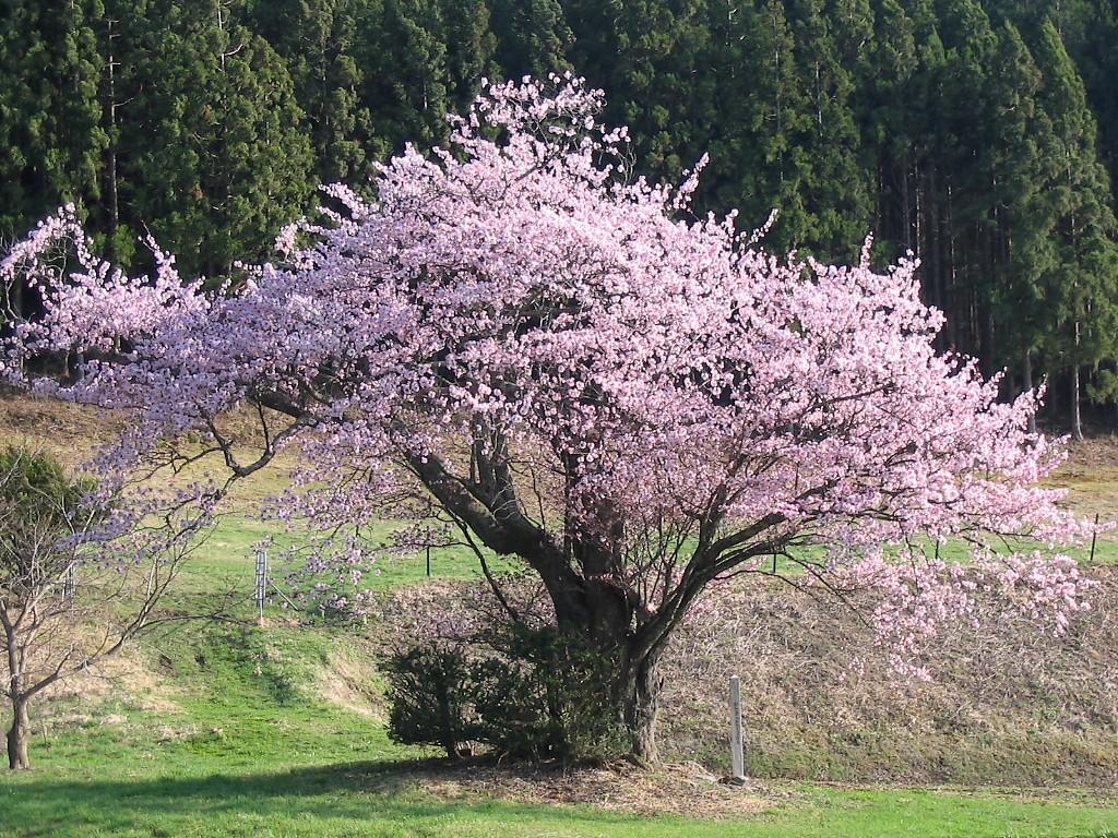 遠野桜マップ(広域)_d0001843_23184018.jpg