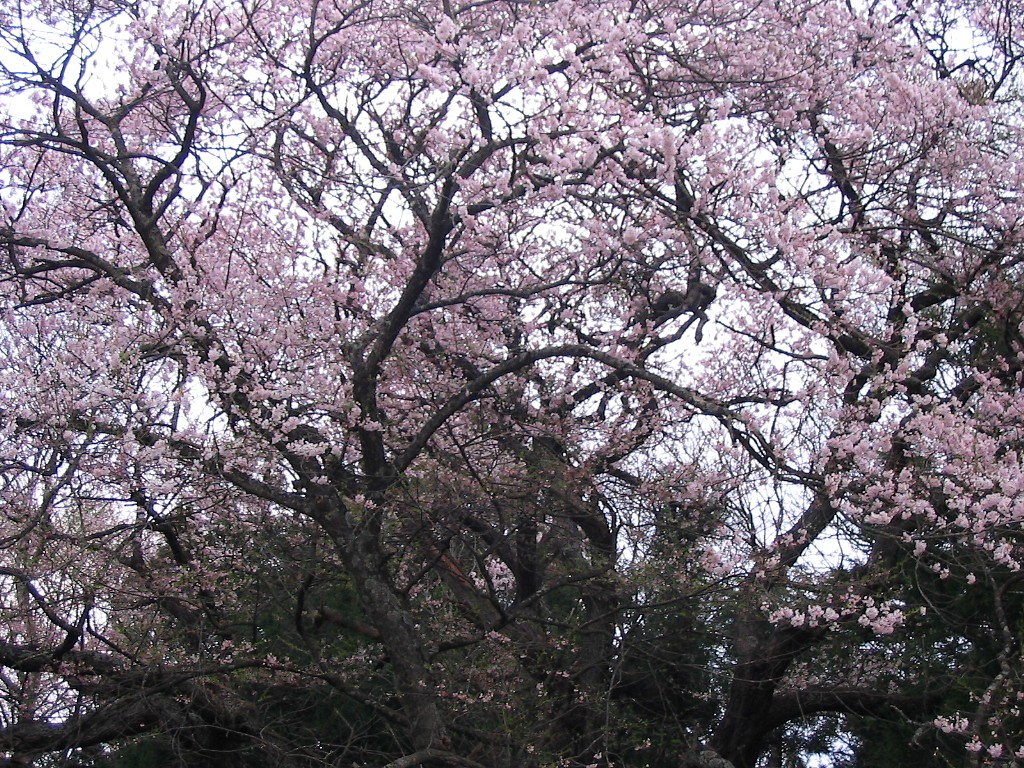 遠野桜マップ(広域)_d0001843_23222526.jpg