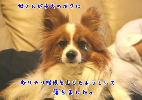 d0013149_15214588.jpg