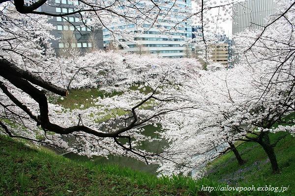 北の丸公園花見ーその3_a0106457_23274213.jpg