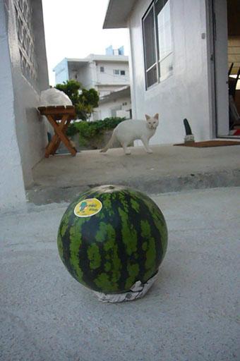 watermelon._c0153966_19273910.jpg