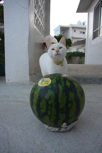 watermelon._c0153966_19303251.jpg