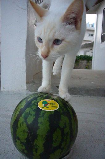 watermelon._c0153966_19322146.jpg