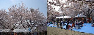 長命館公園さくら祭_d0029276_1947553.jpg