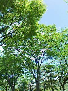 樹木_f0143188_11351936.jpg