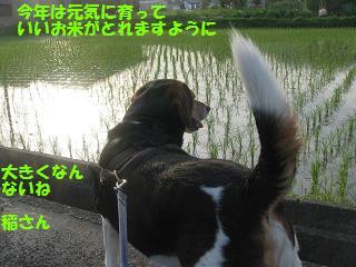 d0104209_205792.jpg