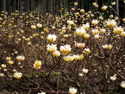 山里に春が_e0048413_21461363.jpg
