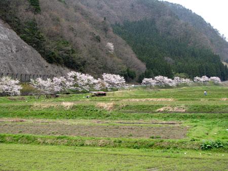 山里に春が_e0048413_21463379.jpg