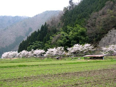山里に春が_e0048413_21481287.jpg