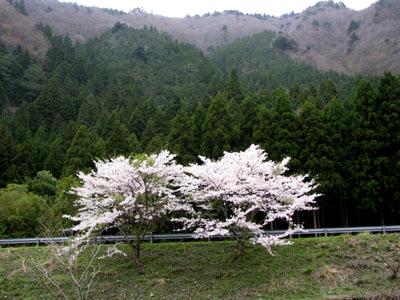 山里に春が_e0048413_21483054.jpg