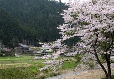 山里に春が_e0048413_21485072.jpg