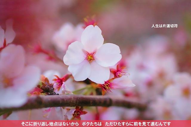 c0112724_20564688.jpg