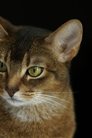 [猫的]トリミングの話その1_e0090124_8273999.jpg