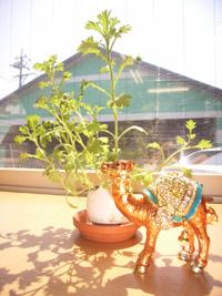 また卵植物とぬいぐるみ_f0129627_1111514.jpg