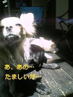 f0148927_16385283.jpg