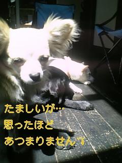 f0148927_16415358.jpg